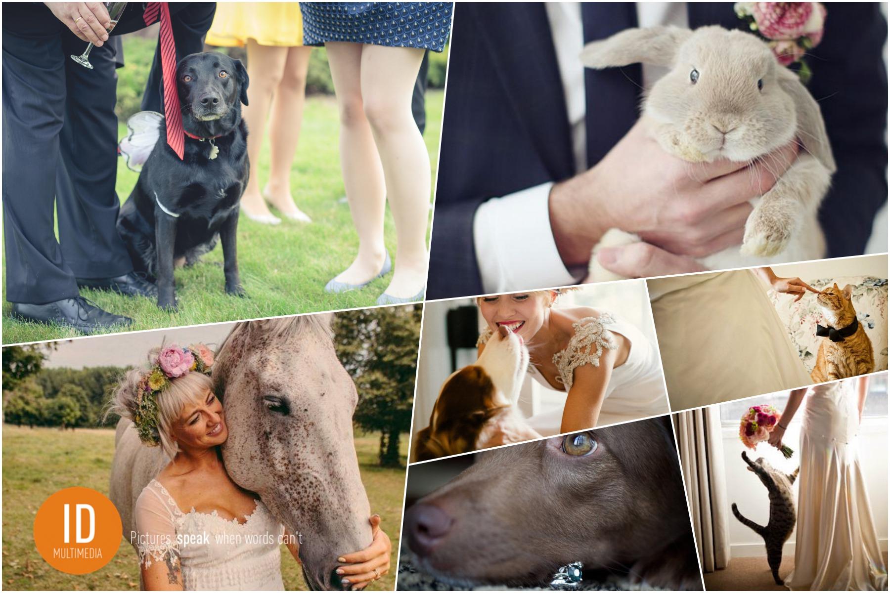 Zwierzęta na ślubie